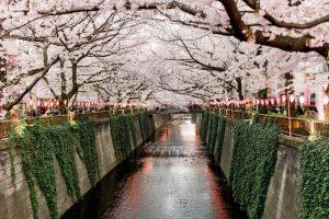 Japão - Sakura Bloom